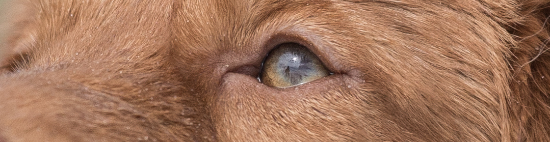Meretes Hundeskole i Solrød